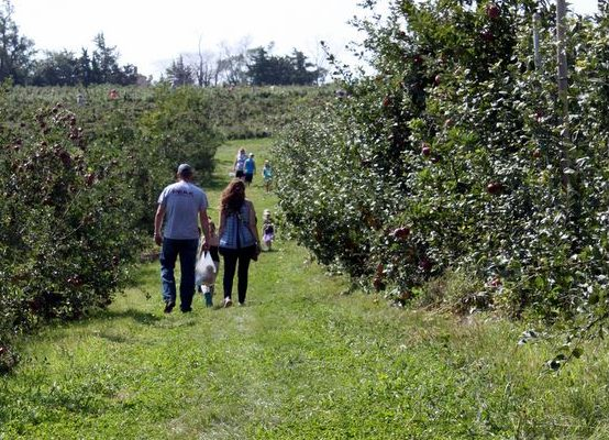 Hillside Orchard is the Perfect Afternoon Getaway